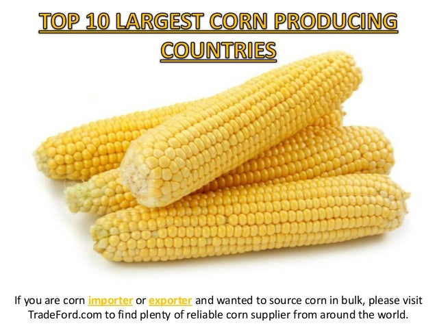 If you are corn importer or exporter and wanted to source corn in bulk, please visit TradeFord.com to find plenty of relia...