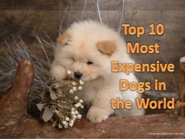 Top 10 most expensive dogs in the world for What are the best dogs in the world