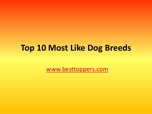 Top 10 Most Like Dog Breeds www.besttoppers.com