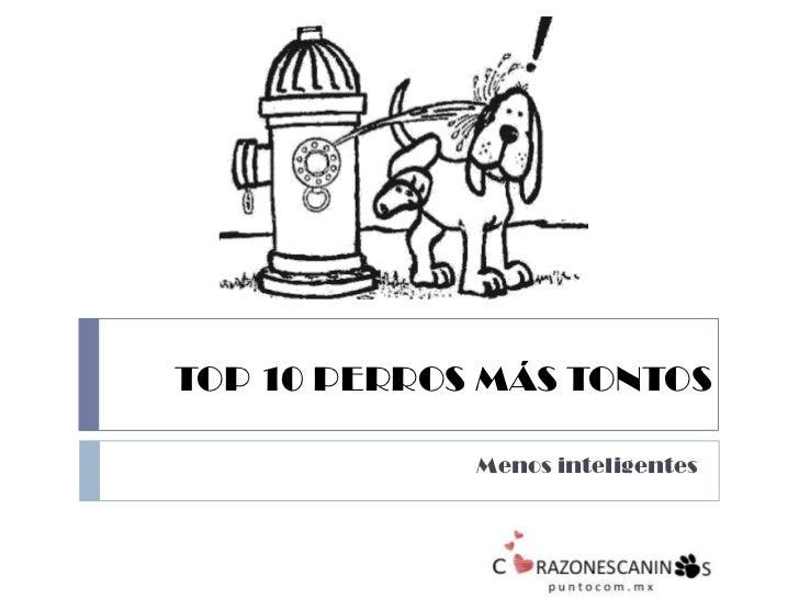 TOP 10 PERROS MÁS TONTOS<br />Menos inteligentes<br />