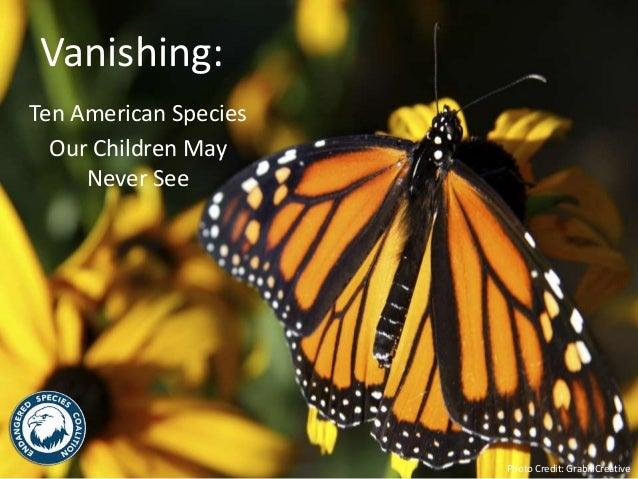 Vanishing:  Ten American Species  Our Children May  Never See  Photo Credit: GrabillCreative