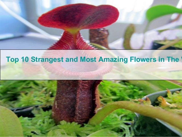 Top 10 Strangest and Most Amazing Flowers in The W
