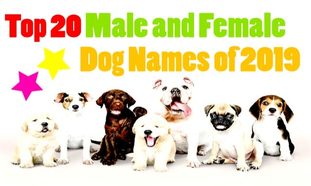 Top 20 Unique Male And Female Dog Names In The World 2019 2020