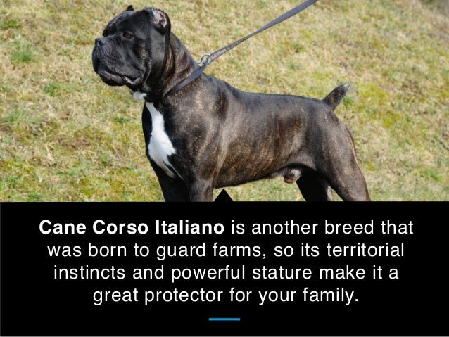 Best Dog Breeds For Protection Training