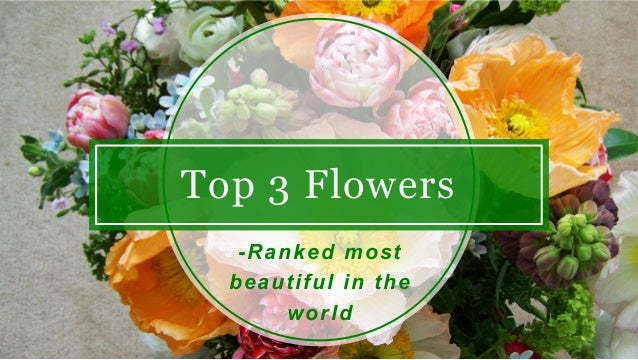 Top 3 Flowers -Ranked most beautiful in the world