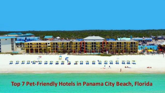 Panama City Beach Hotels >> Top 7 Pet Friendly Hotels In Panama City Beach Florida