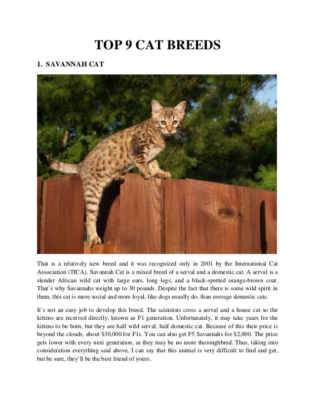 Top 9 cat breeds