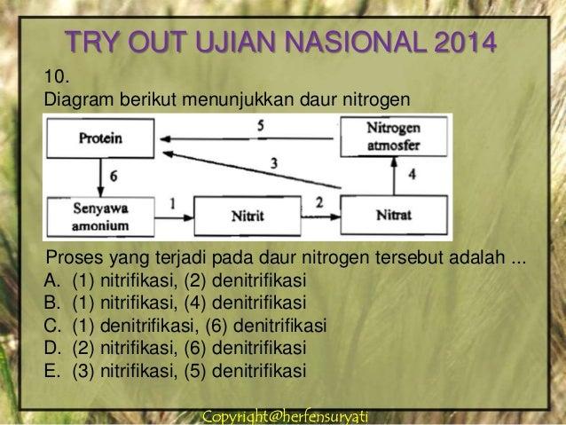 Try out pamungkas ujian nasional 2014 13 copyrightherfensuryaticopyrightherfensuryati 10 diagram berikut menunjukkan daur nitrogen ccuart Image collections