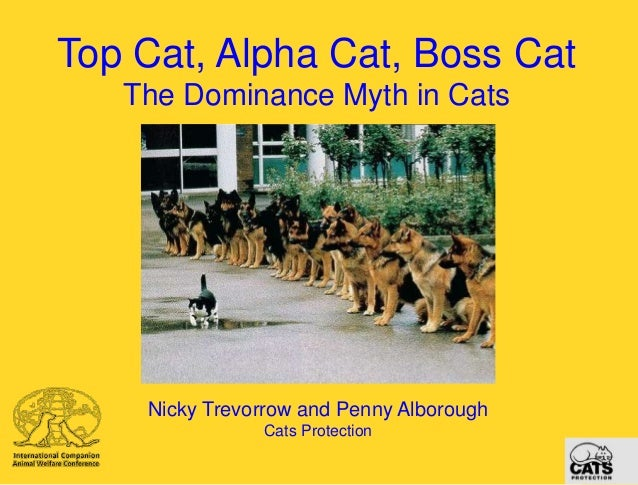 Top Cat, Alpha Cat, Boss Cat The Dominance Myth in Cats  Nicky Trevorrow and Penny Alborough Cats Protection