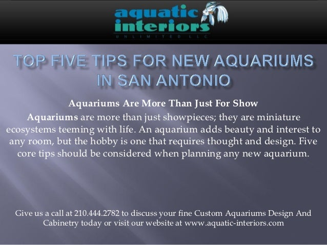 Aquariums Are More Than Just For Show     Aquariums are more than just showpieces; they are miniatureecosystems teeming wi...