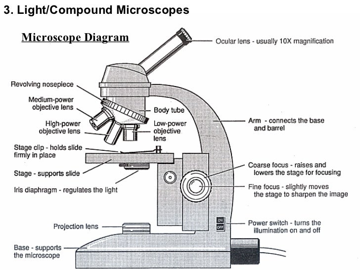 Topic 3 microscopes microscope diagram 3 lightcompound microscopes ccuart Choice Image