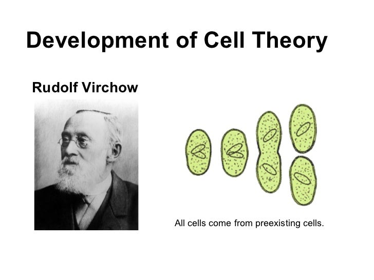 cell theory essay Modern cell theory states living organisms consist of functional cells as structural units of life, are formed by pre-existing cells, contain hereditary information and are similar in chemical composition.