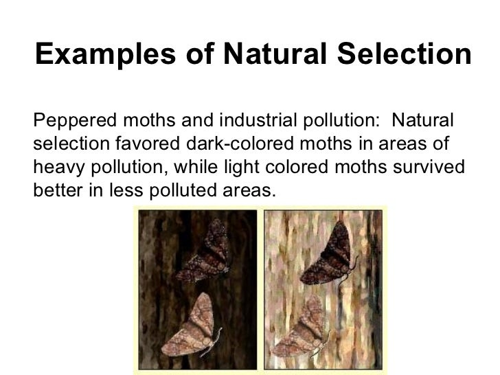 Natural Selection Moths Activity