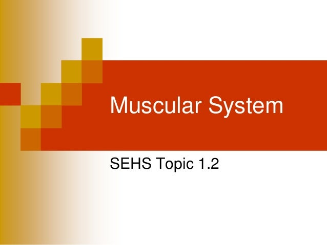Muscular System SEHS Topic 1.2