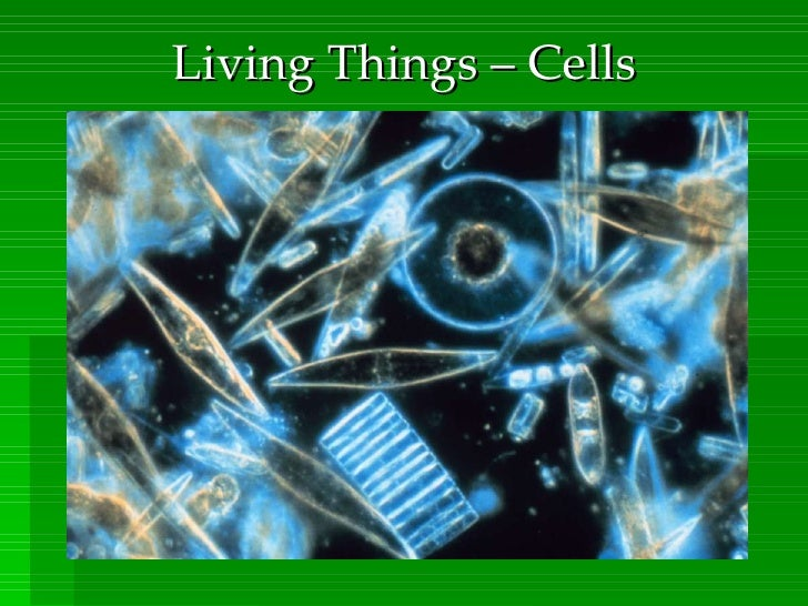 Living Things – Cells