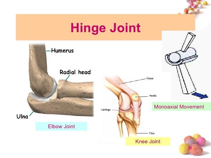 Hinge Joint Knee | www.pixshark.com - Images Galleries ... Hinge Joint Knee