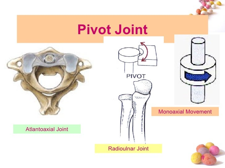 topic 4 joint, Human Body