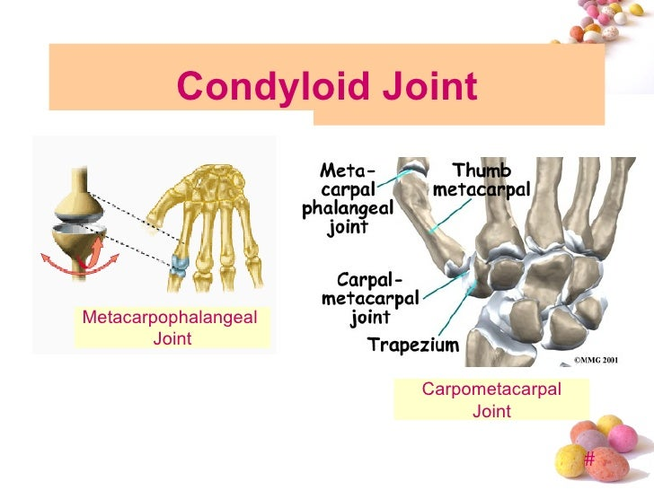 topic 4 joint, Cephalic Vein