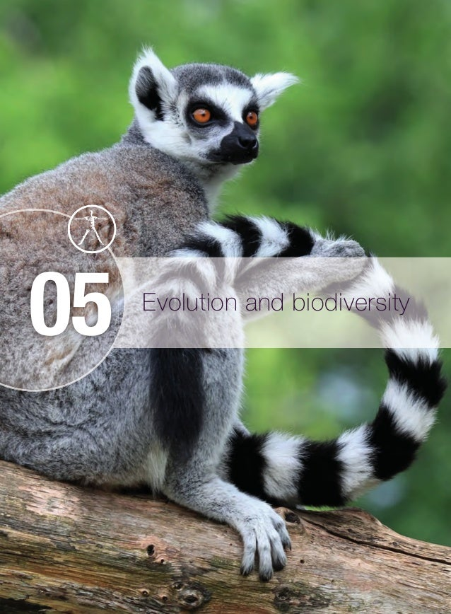 Evolution core evolution and biodiversity 05 m05biosbibdip9045u05dd 228 26092014 1220 fandeluxe Choice Image