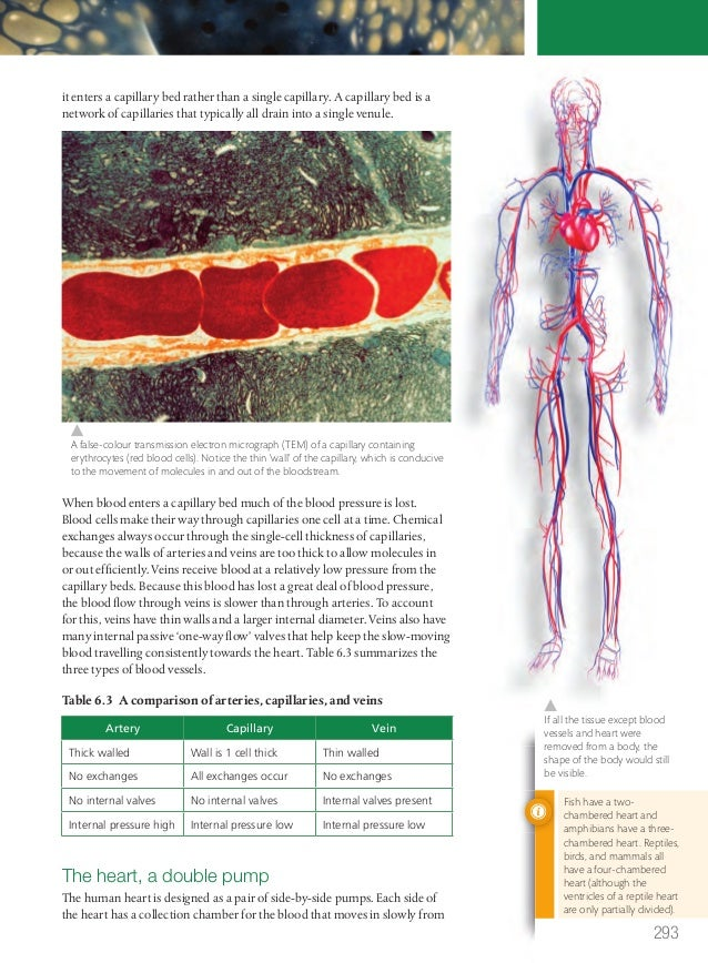 Human Health And Physiology Review Guide