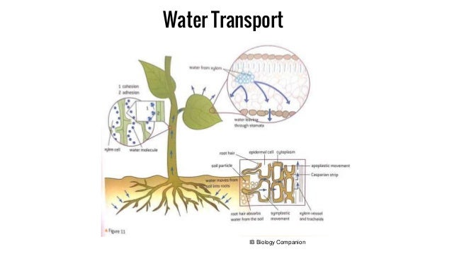 Topic 9 plant physiology