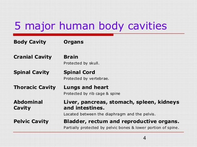 Topic no.3 human body systems (dip) part 1