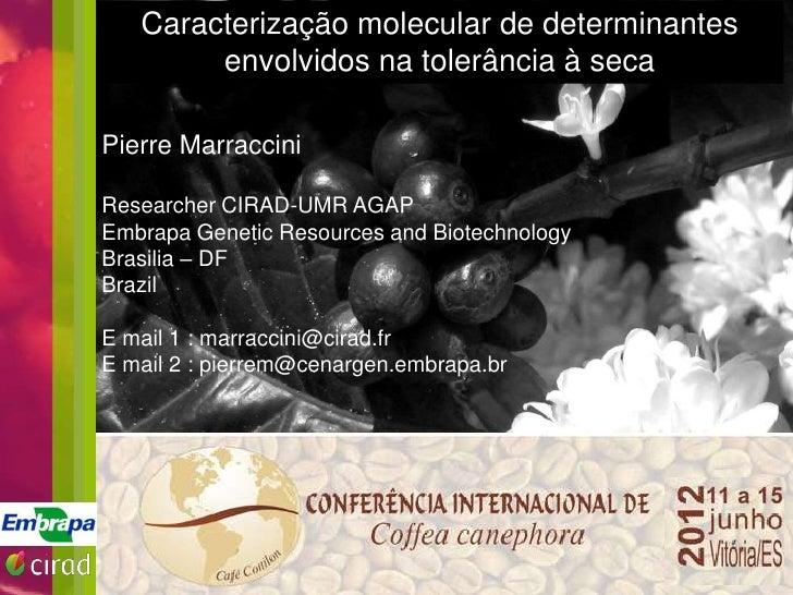 Caracterização molecular de determinantes  TITRE envolvidos na tolerância à secaPierre Marraccini     Texte       • TexteR...
