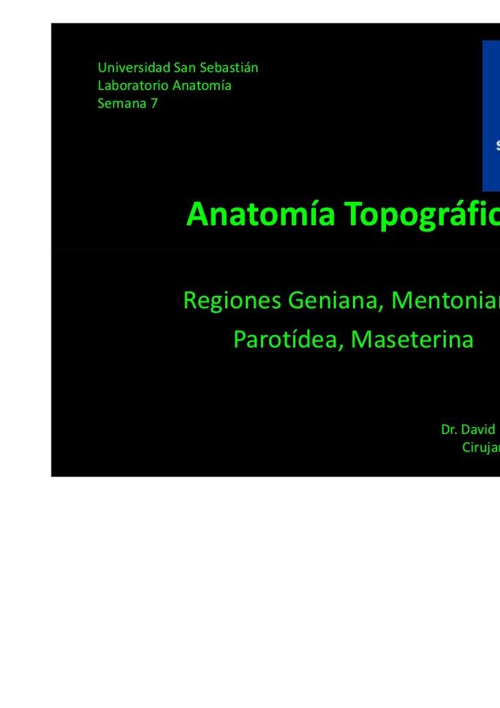 Universidad San SebastiánLaboratorio AnatomíaSemana 7             Anatomía Topográfica             Regiones Geniana, Mento...