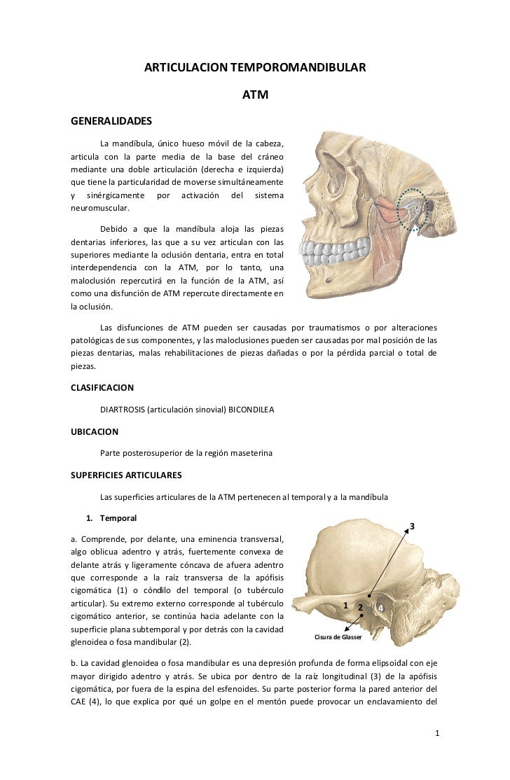ARTICULACION TEMPOROMANDIBULAR                                             ATMGENERALIDADES        La mandíbula, único hue...