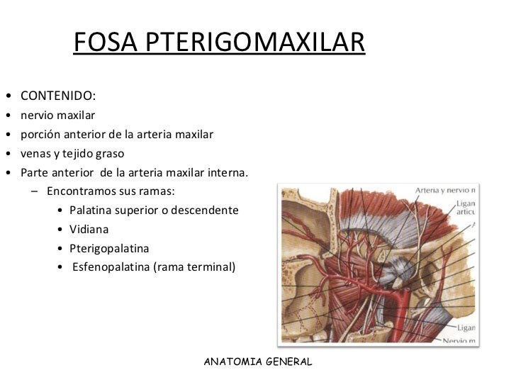 Topografica fosa pterigomaxilar, infratemporal yacm