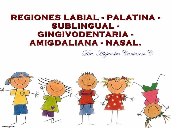 REGI ONES LABIAL - PALATINA - SUBLINGUAL - GINGIVODENTARIA - AMIGDALIANA - NASAL. Dra. Alejandra Cantarero C.