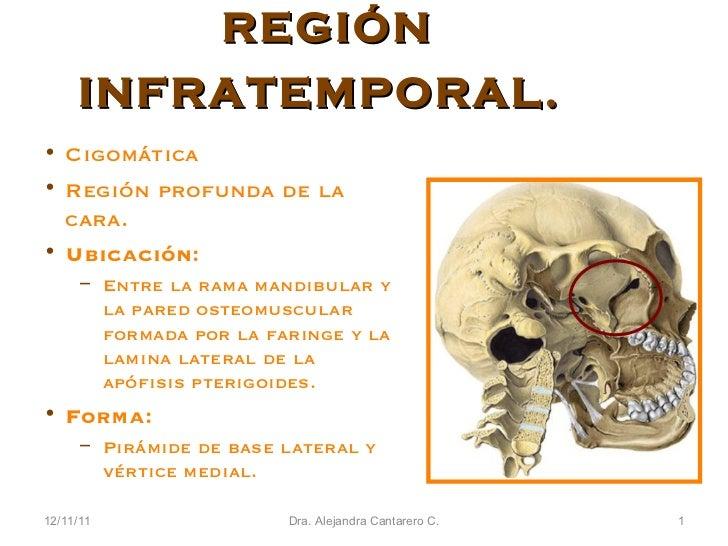 12/11/11 Dra. Alejandra Cantarero C. REGIÓN INFRATEMPORAL.   <ul><li>Cigomática </li></ul><ul><li>Región profunda de la ca...