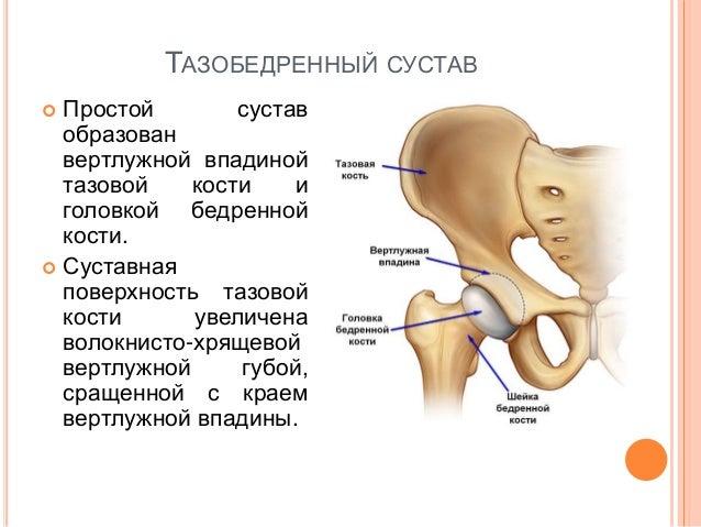 Топография тазобедренного сустава боль суставах ног рук