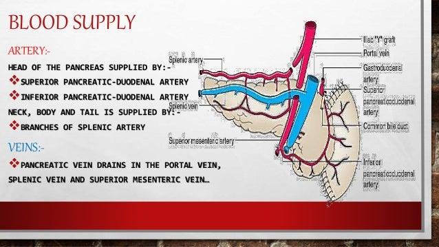 Topography Anatomy Of Pancreas