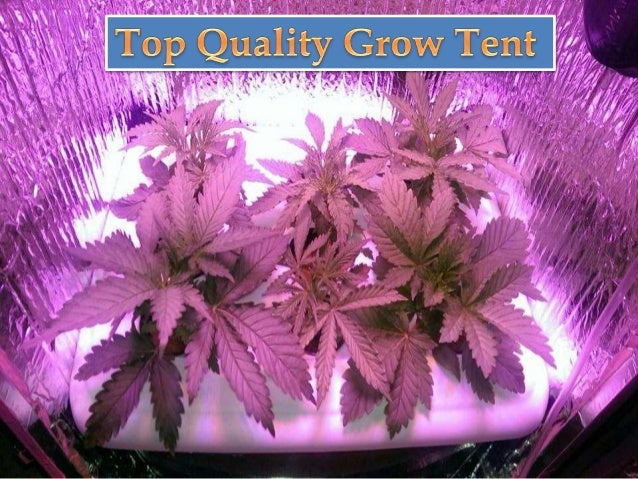 When it comes to offering the highest quality of grow tents there is no doubt ... & Top Quality and Affordable Grow Box