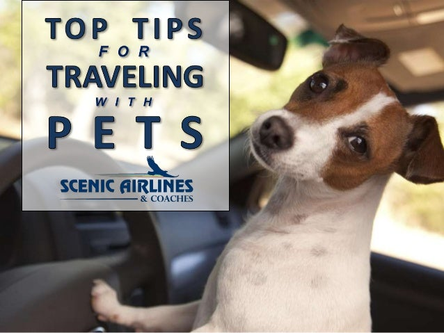 Whether you're taking a Grand Canyon tour or a trip to the City of Lights, you'll need to take proper action to ensure you...
