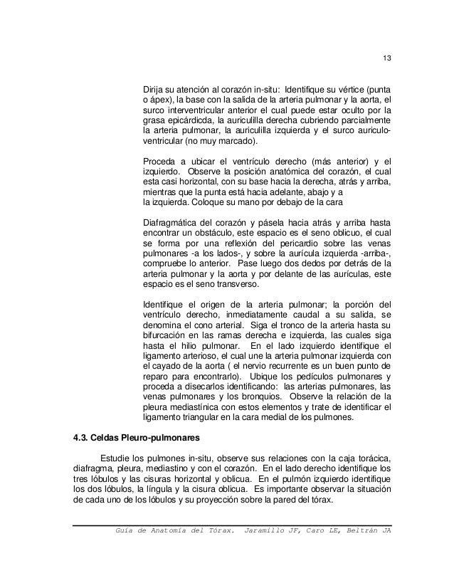 Excepcional Anatomía De La Salida Torácica Imagen - Imágenes de ...