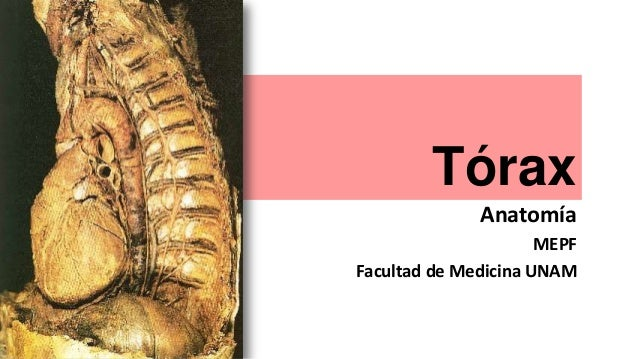 Tórax Anatomía MEPF Facultad de Medicina UNAM