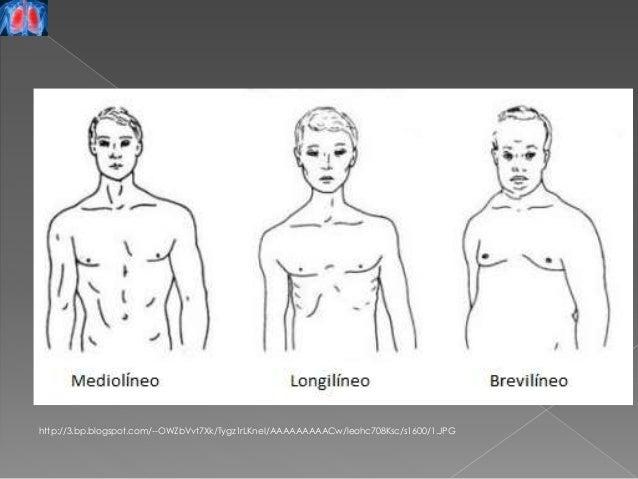 Resultado de imagen para torax normolineo brevilineo