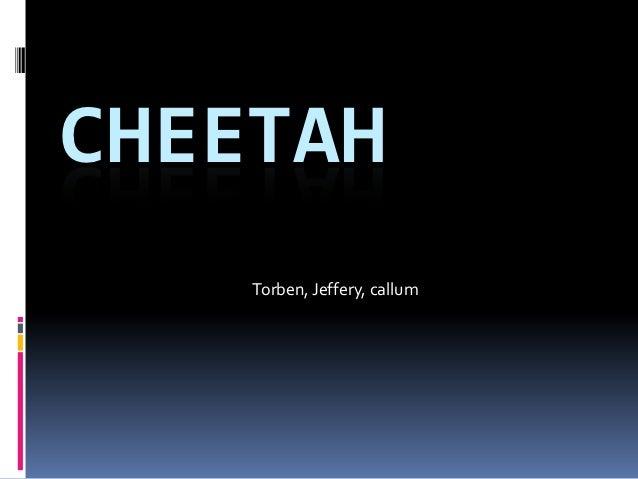 CHEETAH    Torben, Jeffery, callum