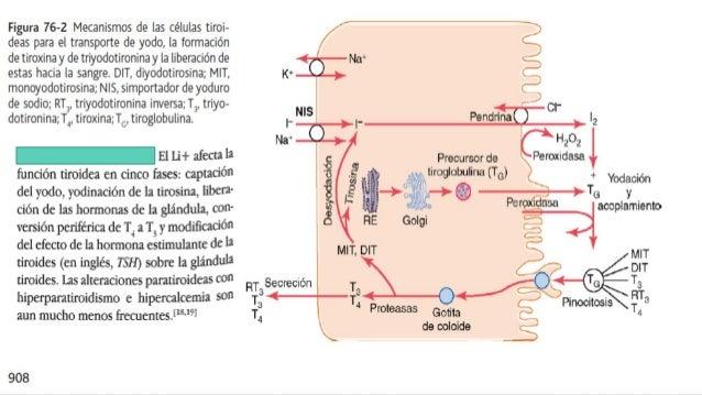 Tormenta tiroidea consideraciones fisiologicas, diagnostico , manejo