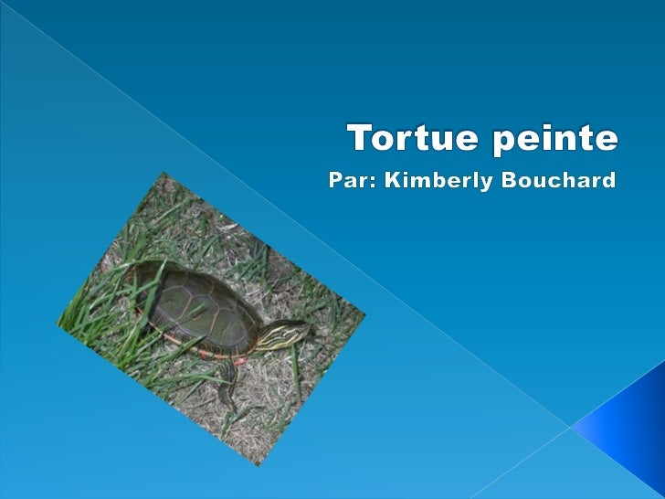 Tortue peinte<br />Par: Kimberly Bouchard<br />