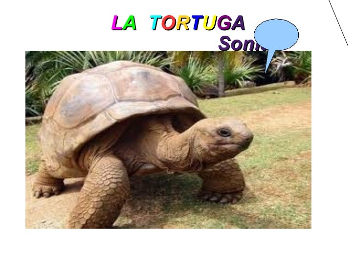 L A   T O R T U G A   Sonia