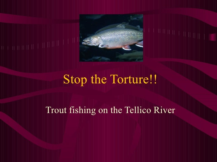 Stop the Torture!! Trout fishing on the Tellico River