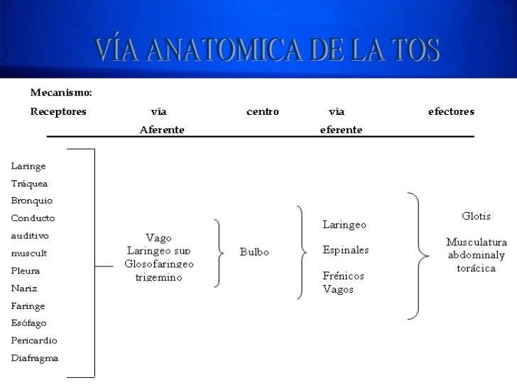 VÍA ANATOMICA DE LA TOS