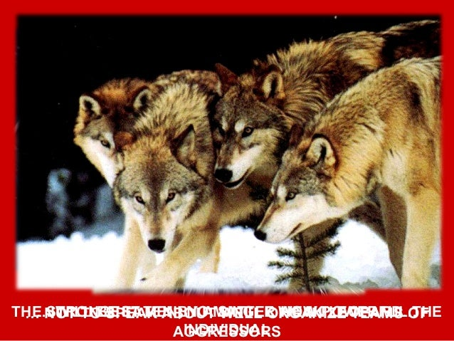 INDIVIDUALS MAY BE BRAVE…… BUT ONLY TOGETHER THEY MAY OVERCOME