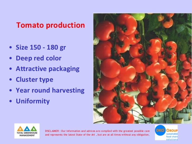 Tomato production•   Size 150 - 180 gr•   Deep red color•   Attractive packaging•   Cluster type•   Year round harvesting•...