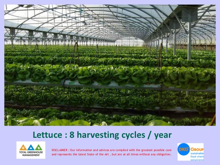 Lettuce : 8 harvesting cycles / year    DISCLAIMER : Our information and advices are compiled with the greatest possible c...