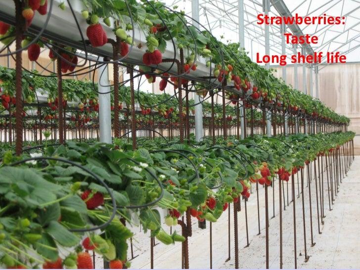 Strawberries:                                                                                 Taste                       ...