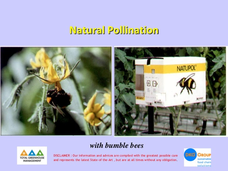 Natural Pollination                          with bumble beesDISCLAIMER : Our information and advices are compiled with th...